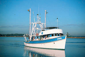photo of Blue Fin
