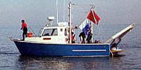 photo of Caleta